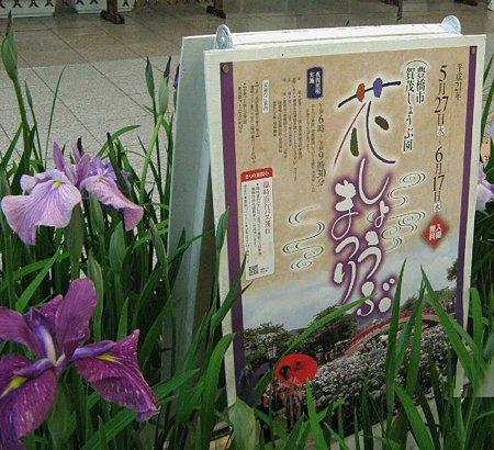 kamo-syoubu-210525-2