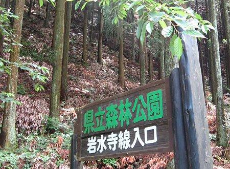 静岡県立森林公園 2009年6月 空の散歩道 初夏の散策-210608-1