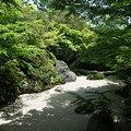 庭園の木陰