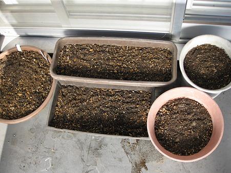秋植え球根を植えた