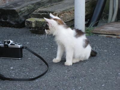 チビ猫A1 これにゃーに?