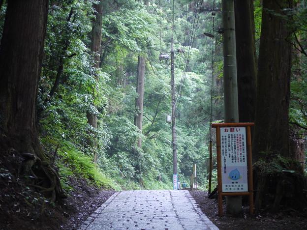 高尾山 登山道1号路
