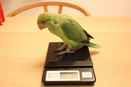 よもぎ 体重測定
