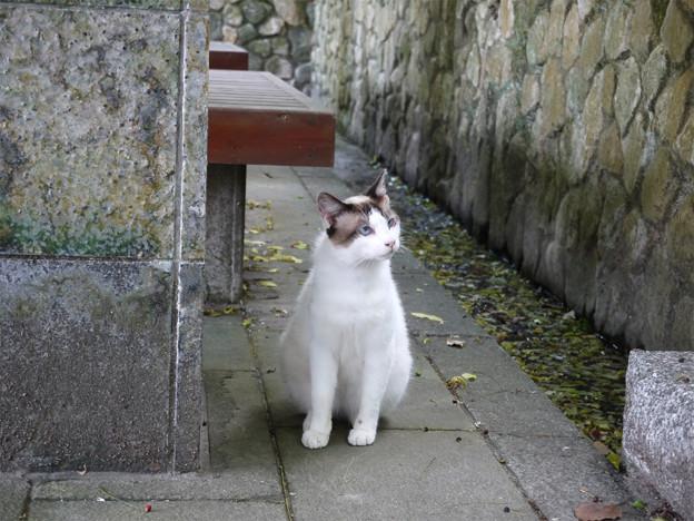 青い目の猫@天拝山歴史自然公園