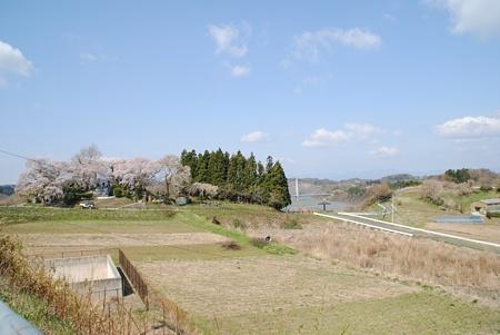 miharutakizakura19