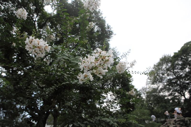 IMG_4153上海・蘇州