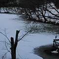 健民公園 白鳥の池
