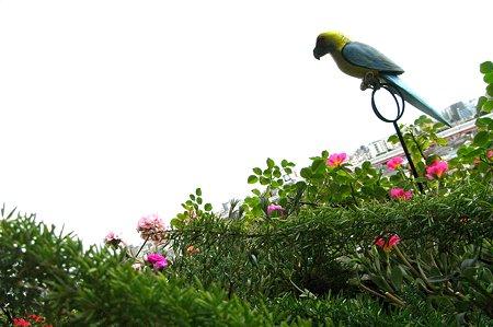 ベランダ・鳥左