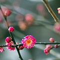 Photos: 春遠からじ