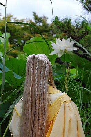 蓮を眺める