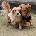 写真: 東矢君と摩耶さん