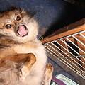 写真: クレアの開き(笑)