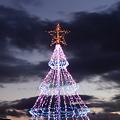 Photos: 国営讃岐まんのう公園のシンボルツリーです。