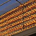 アンポ柿の準備